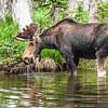 2016_7_17 Brainard State Park-9815-2