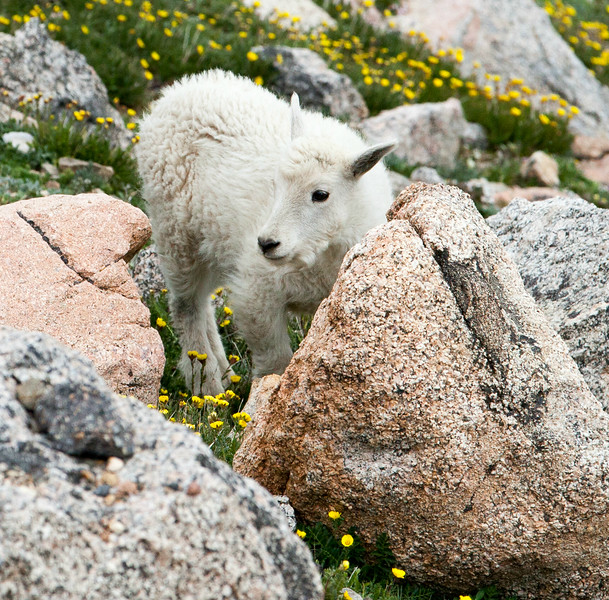 2016_7_15 Colorado Mt  Evans-1963