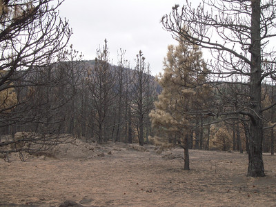 Four Mile Canyon Fire Aftermath