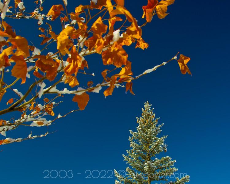 """Day after the Snow""<br /> Denver Colorado"