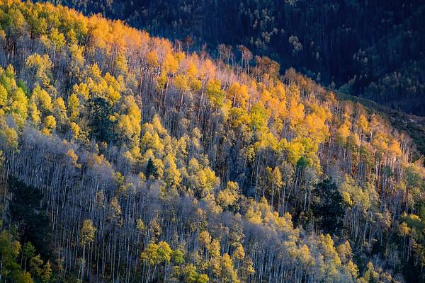 Autumns Last Lines