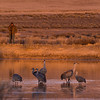 Sandhill Cranes - Monte Vista