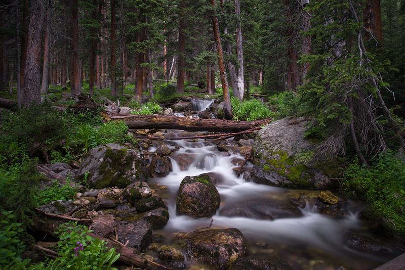 Savage Forest Creek