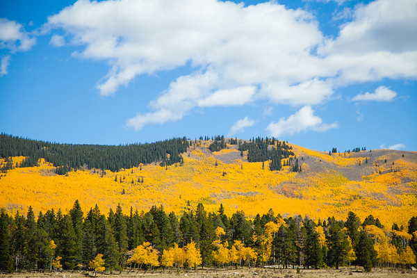 Kenosha Pass is covered with aspen trees