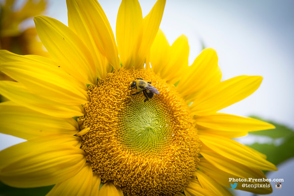Buttonwood Farm's Sunflower for Wishes Fundraiser