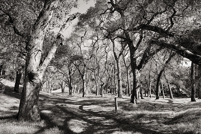 Buckeye Ranch East Bay Regional Park