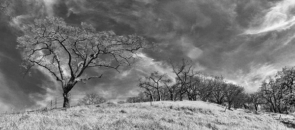 Borges Ranch Open Space, Walnut Creek California