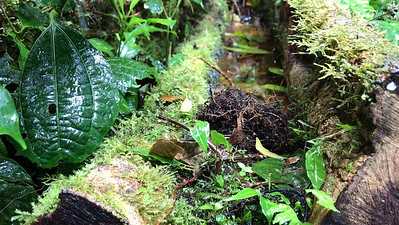 Video: Monteverde Cloud Forest Biological Reserve