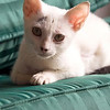 Gato - adopted us in Monteverde. Would come in and play/sleep whenever we were around.