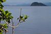Mangle e Isla Pájaros en Golfo de Nicoya