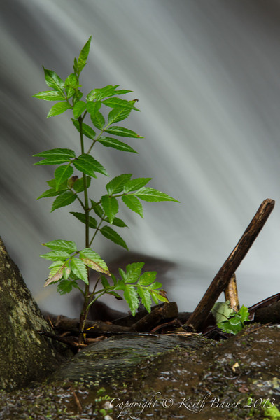 Plants along a tropical stream