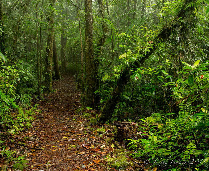 A walk thru one of the beautiful cloud forests in Costa Rica