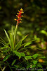 Rain Forest Flora