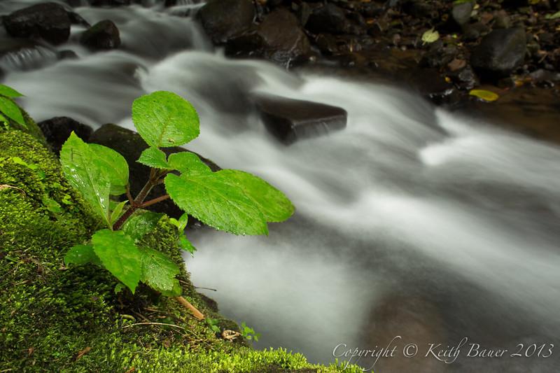 Vegetation along a tropical stream