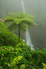Fern tree in the mist with the waterfall