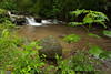 A soothing scene of a stream near one our our lodges