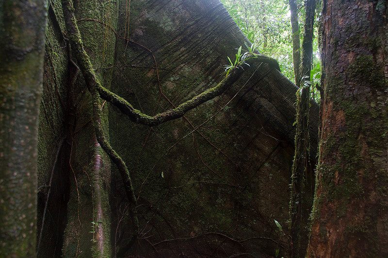 Base de árbol en el bosque