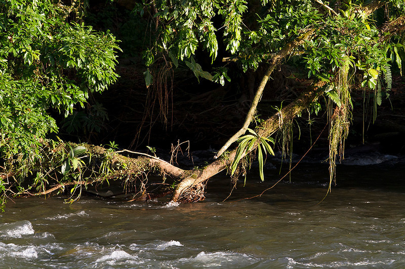 Orillas del río Sarapiquí