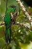 Joven de Quetzal