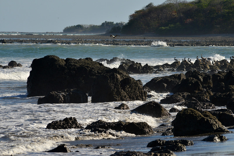 Seabirds, Montezuma Beach