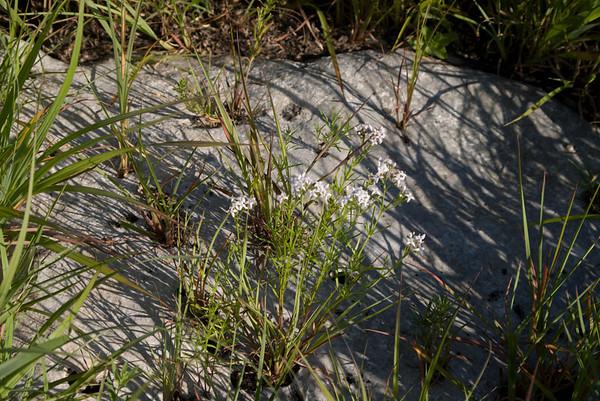 Cottonwood Falls Lake, Cottonwood Falls, KS