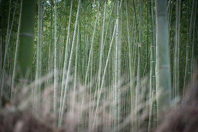 Just bamboo.  Framed by bamboo.