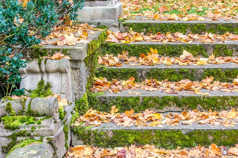 Steps through Time