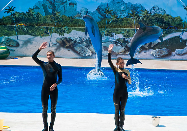 Sevastopol dolphinarium