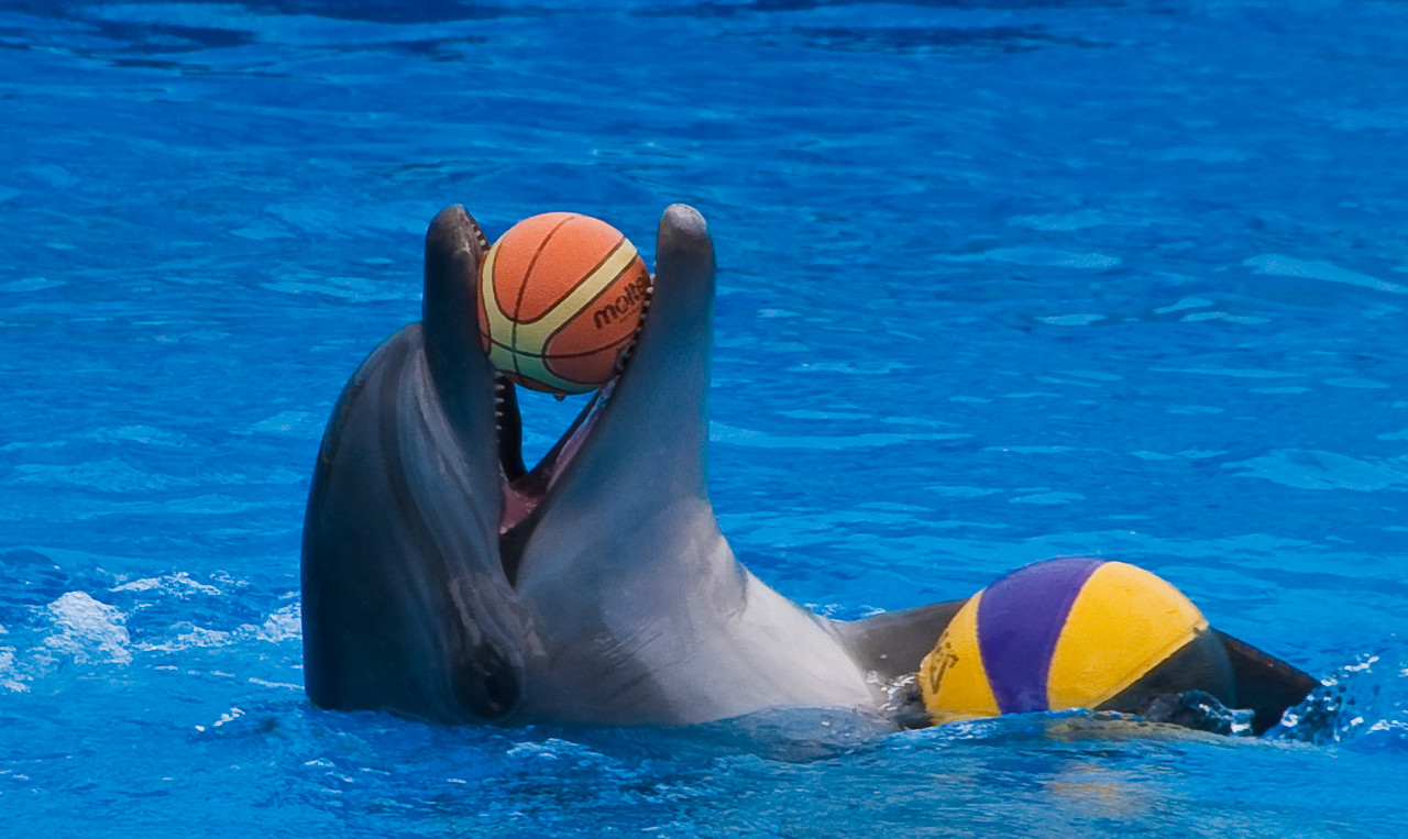 Dolphin plays with ball