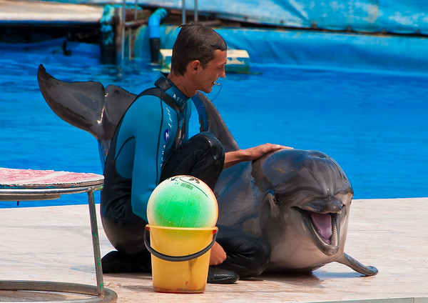 Trainer with dolphin