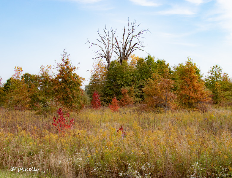 The next four are Fall scenes.  101020