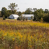 Field of mostly Goldenrod.  092720