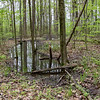 I use this spot in the woods as a water indicator.  In the Spring it is soggy and full, and sometimes dries out in the summer.  051720
