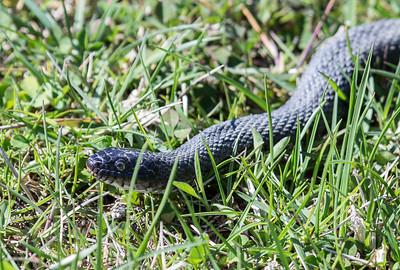 4-18-16.  I like snakes.