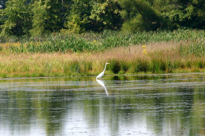 Egrets were still around in September 09/12/04
