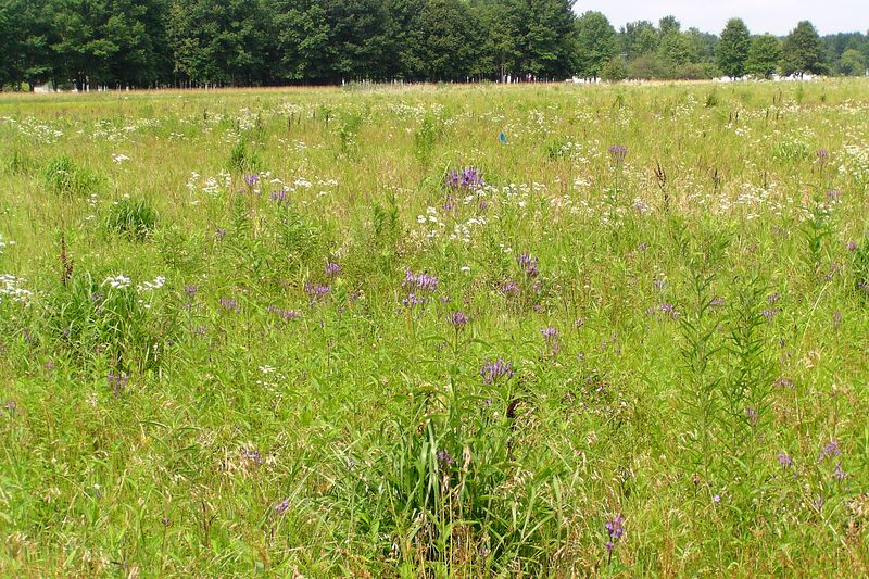 View across the meadow in summer.  07/18/04