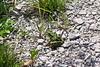 Nice Leopard Frog.  08/15/04