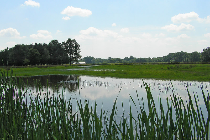 The dryness in the wetlands was now so pronounced that the areas which had been underwater in the spring were now grassed.  August 7, 2005.