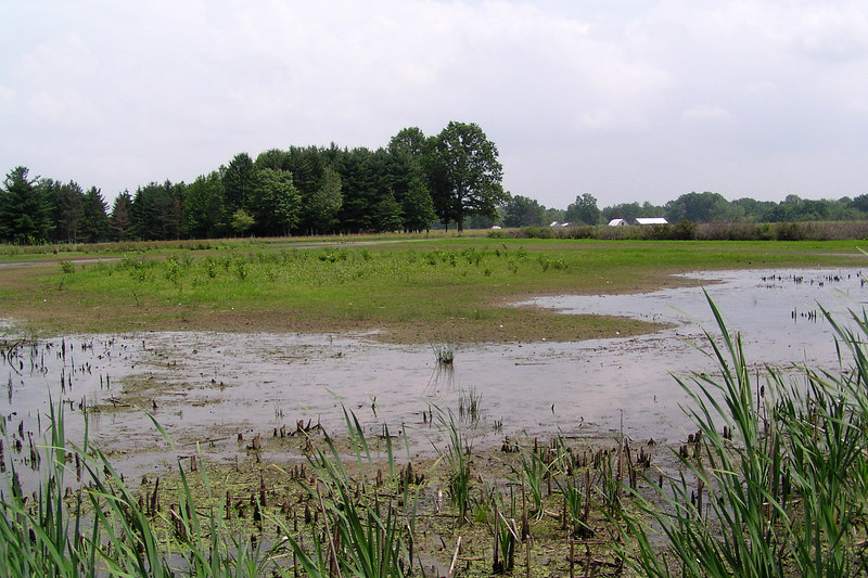Note the low water level in mid July.  July 17, 2005.