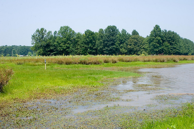 July 29, 2007.  Vegetation now growing in the dried up areas.