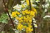 October 6, 2007.  Nature's Fall flower arrangement.