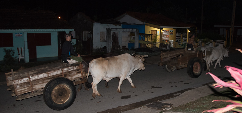 6:30AM - Oxen pulled carts going down street we stayed at in Vinalis