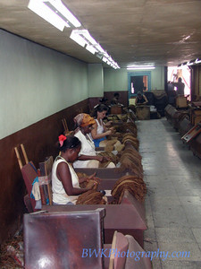 Sorting room in Havana cigar factory
