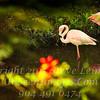 Flamingo at Las Terrazas Cuba - Copyright 2017 Steve Leimberg UnSeenImages Com _Z2A6049