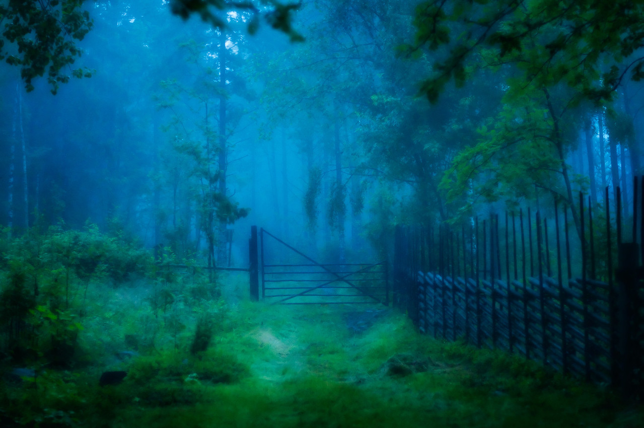 Skogsgrind