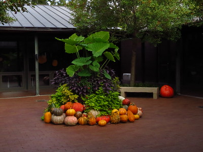 Dallas Arboretum - Chihuly Art Exhibit