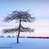 Tree and Wintery Sky<br /> A barren tree stands silohetted against a wintery sky.