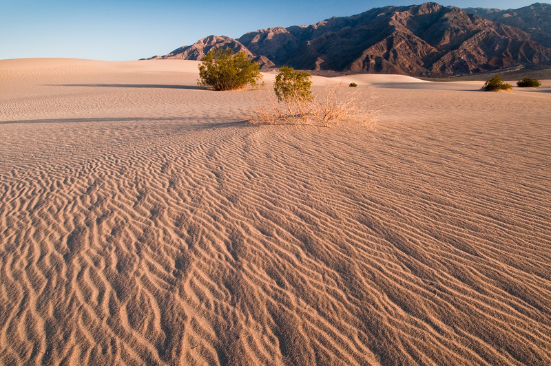 Desert Ripples<br /> Mesquite Flat Dunes, Death Valley National Park, California<br /> 2009