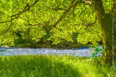By the River Derwent