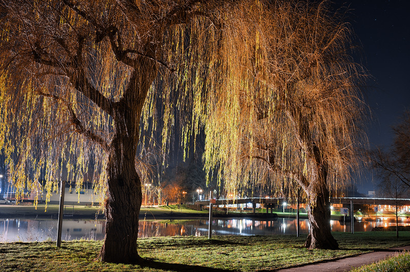 Weeping Willow, Diekirch, Luxembourg